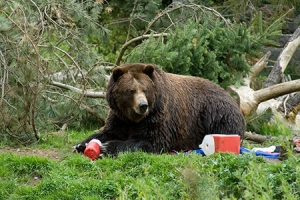 dealing-with-bears-when-camping-442