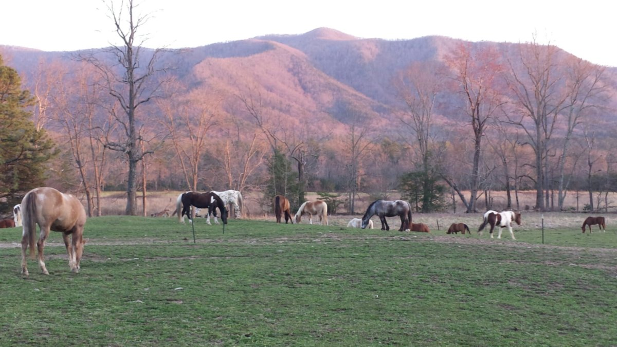 Cades Cove In The Smokies Crazy4camping