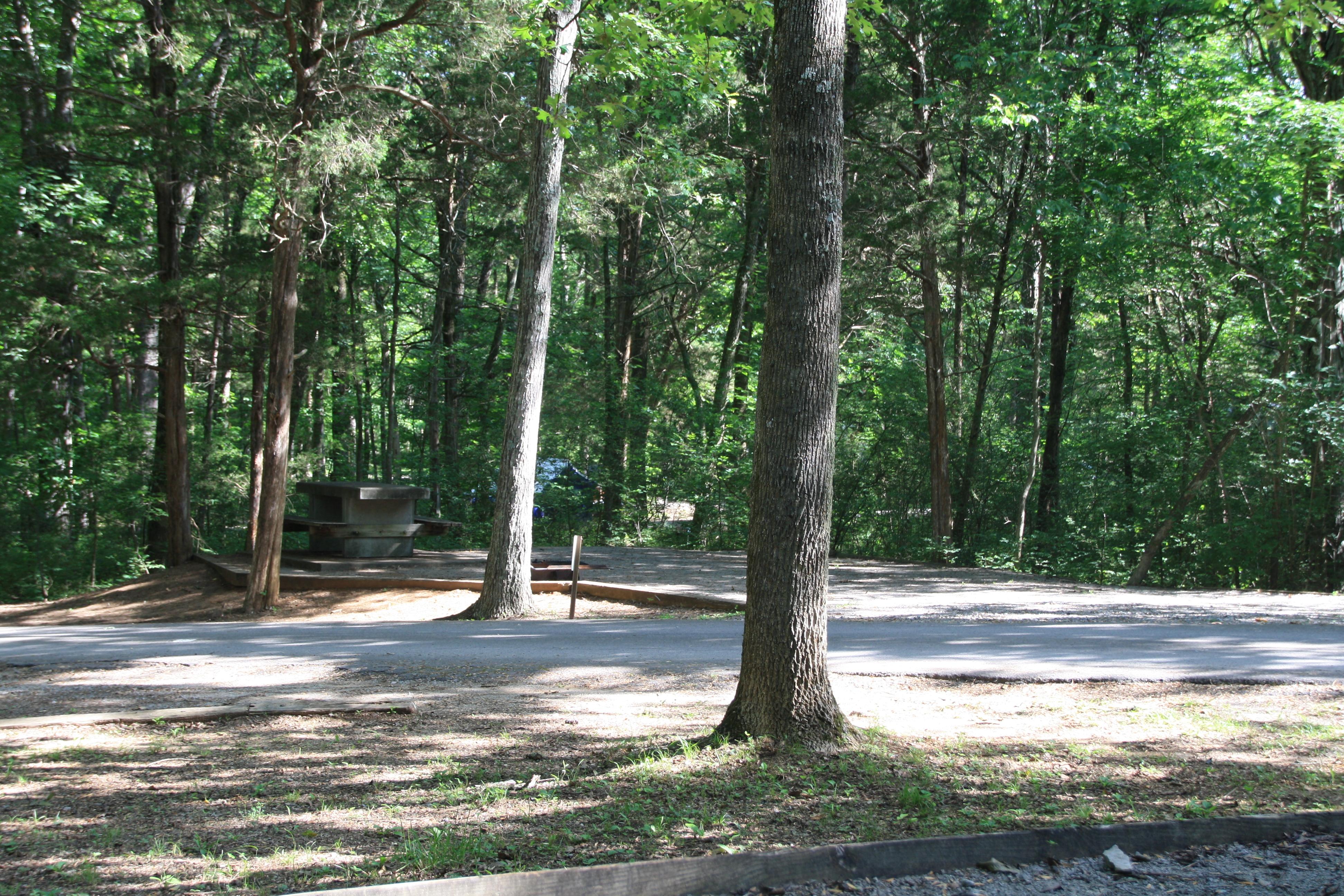 Cedars Of Lebanon State Park Lebanon Tn Crazy4camping