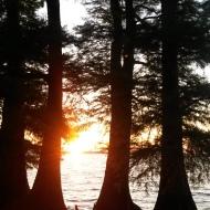 Reelfoot Lake State Park, Tiptonville TN   crazy4camping