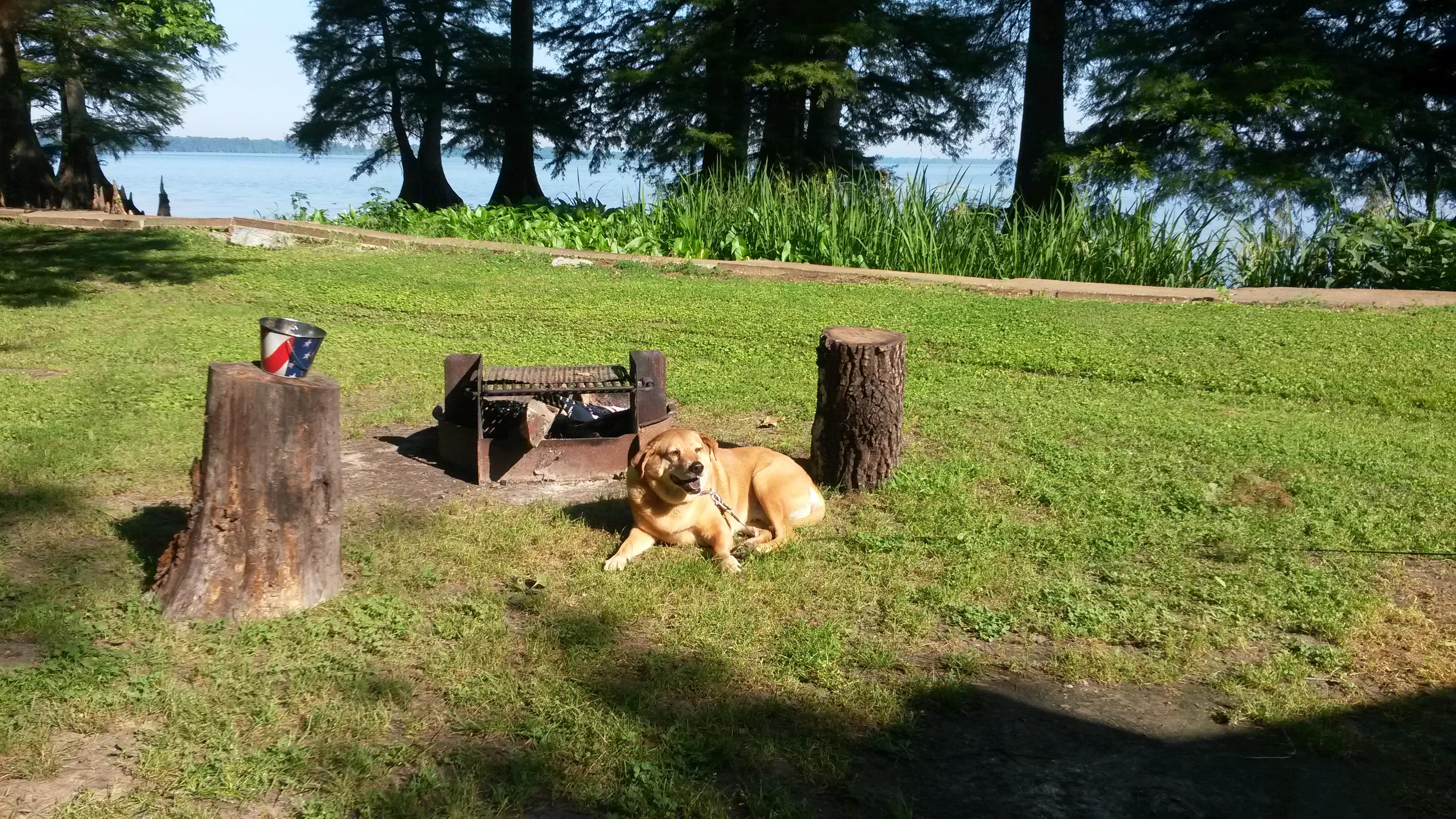 Reelfoot Lake State Park, Tiptonville TN | crazy4camping
